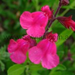 image pink2-jpg